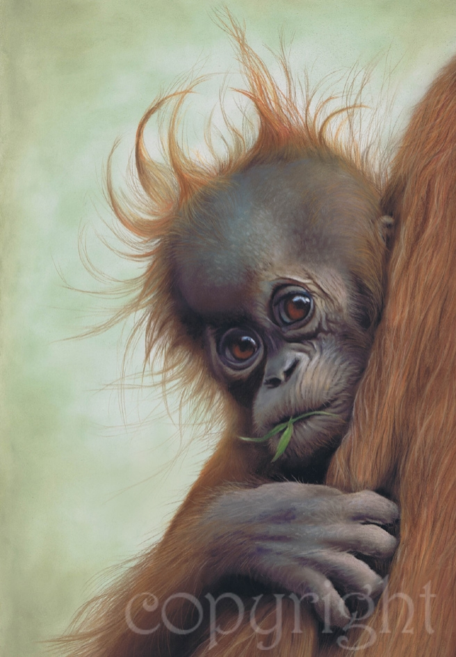 'Clinging On' limited edition fine art giclee print from a pastel original. Fits a standard size frame. Order online and see more prints at www.AnimalSpiritArt.co.uk/wildlifeprints.html
