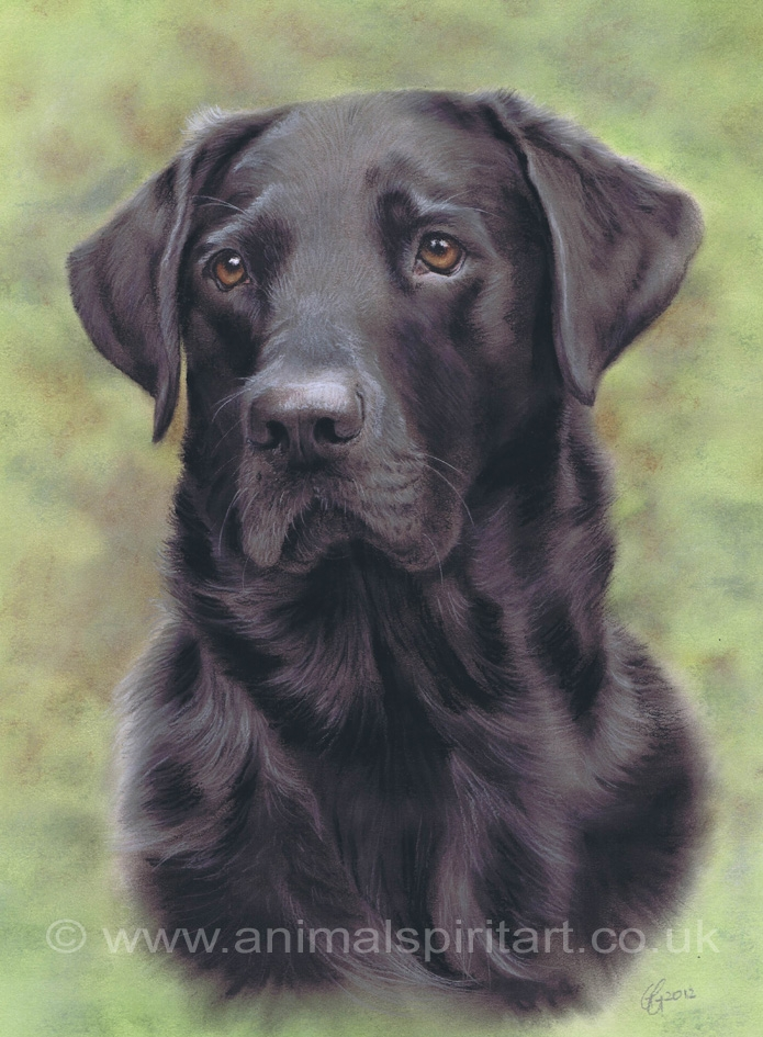 Example of a commissioned pastel dog portrait painted from reference photos. I guarantee a perfect likeness. Sizes and prices on my website at www.AnimalSpiritArt.co.uk/petportraitprices.html.