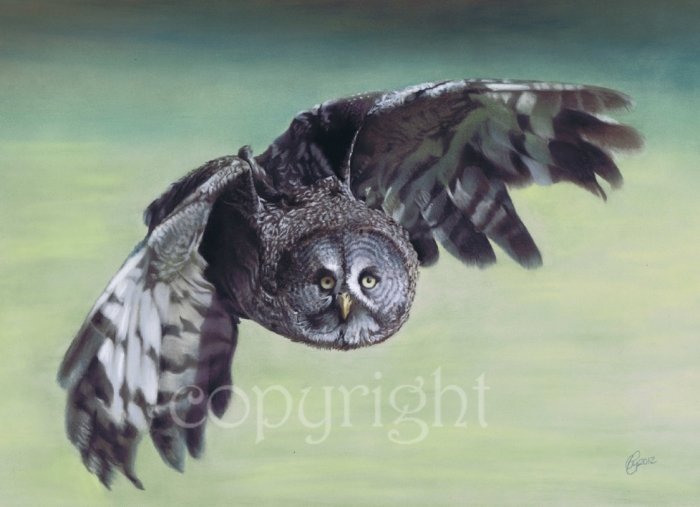 'Great Grey Owl' limited edition fine art giclee print from a pastel original. Fits a standard size frame. Order online and see more prints at www.AnimalSpiritArt.co.uk/wildlifeprints.html