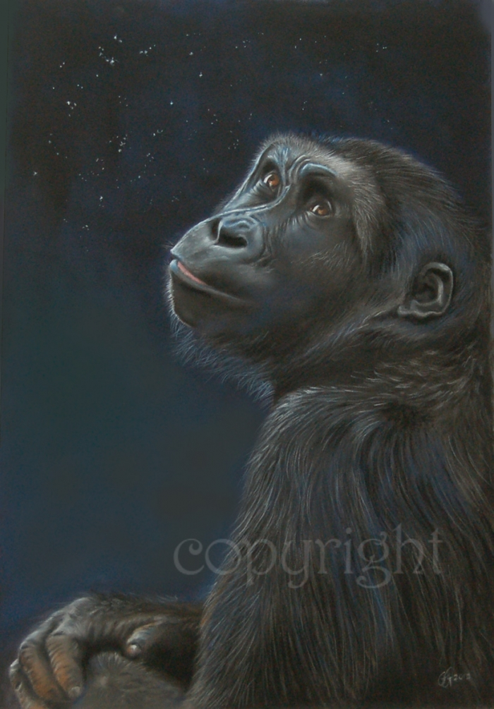 'Stargazing' limited edition fine art giclee print from a pastel original. Fits a standard size frame. Order online and see more prints at www.AnimalSpiritArt.co.uk/wildlifeprints.html