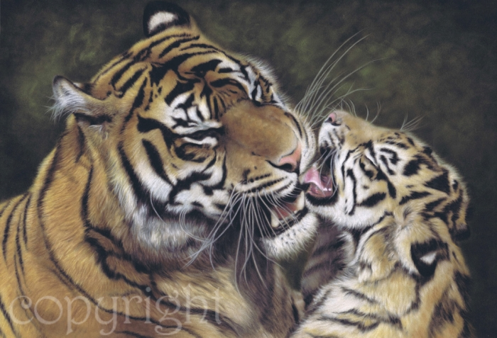 'Sumatran Tiger and Cub' limited edition fine art giclee print from a pastel original. Fits a standard size frame. Order online and see more prints at www.AnimalSpiritArt.co.uk/wildlifeprints.html
