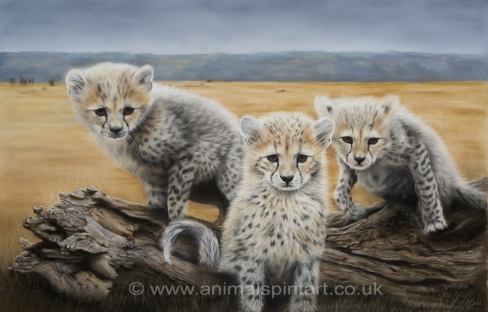 'Who Goes There?' limited edition fine art giclee print from a pastel original. Fits a standard size frame. Order online and see more prints at www.AnimalSpiritArt.co.uk/wildlifeprints.html